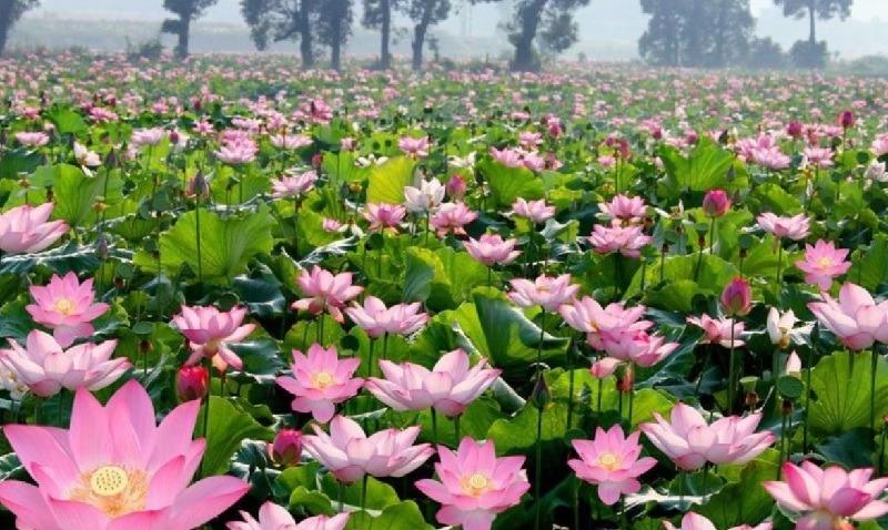 Flores hidropónicas