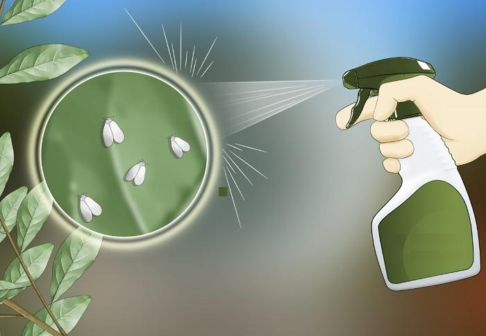 Plagas en hidroponia
